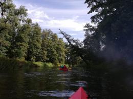 Rzeka Łyna z perspektywy kajaka